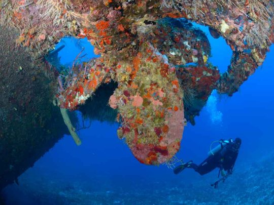 diver on the wreck of the Jado Trader